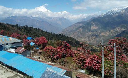 Dhaulagiri Himal view from Ghorepani Poon Hill
