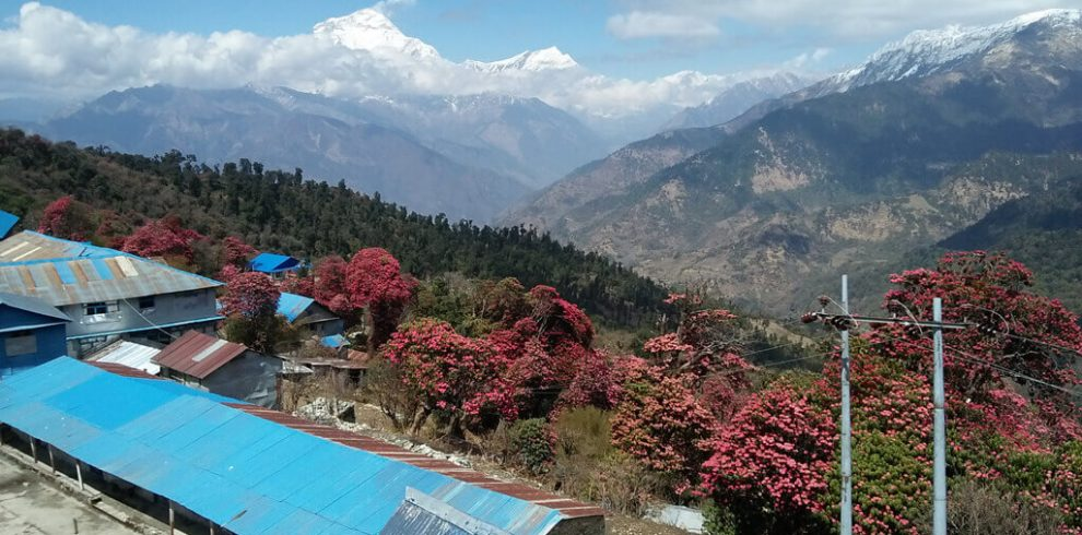 Dhaulagiri Himal view from Ghorepani Poon Hill